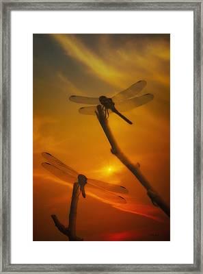 Dragonflys In The Sunset Framed Print