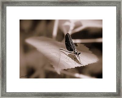Dragons Dont Fly Framed Print by Ed Smith