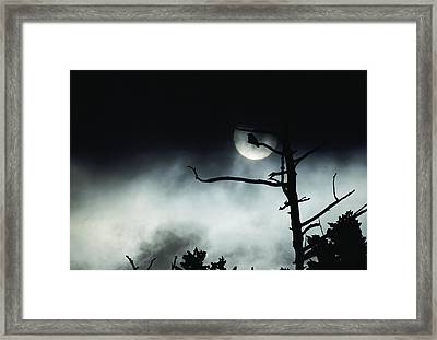 Dramatic Scene Of A Dead Tree Framed Print by Michael S. Quinton