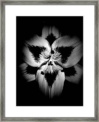 Drawn To The Center  Framed Print by Beth Akerman