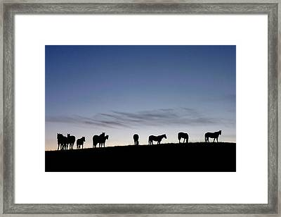 Dream Framed Print by Carla Froshaug