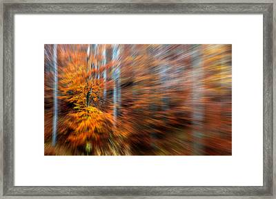 Framed Print featuring the photograph Dream Forest by Odon Czintos