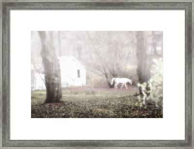 Framed Print featuring the photograph Dream Horse by Marianne Campolongo