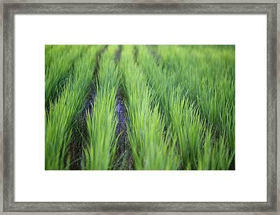 Dream Like Green Framed Print by Jasohill Photography