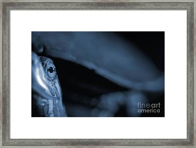 Dream Of A Blue Turtle Framed Print by Janeen Wassink Searles