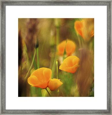 Dream Poppies Framed Print