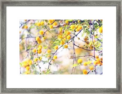 Dream Puffs Framed Print