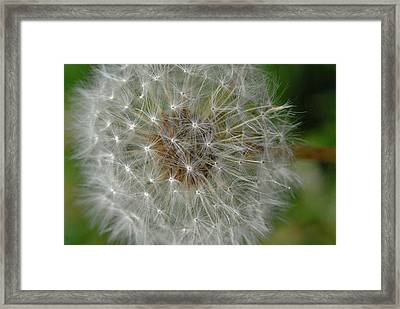Dream Station Framed Print by Michael Rucci