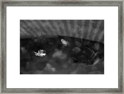 Framed Print featuring the photograph Dreamfrog by Luis Esteves