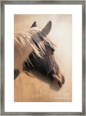 Dreaming Across The Fence Framed Print by Betty LaRue
