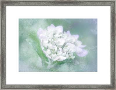 Dreaming Floral Framed Print by Brenda Bryant