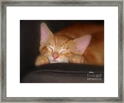 Dreaming Kitten Framed Print