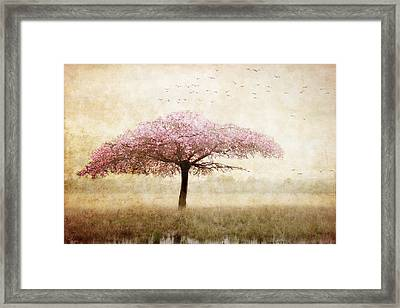 Dreaming Framed Print by Margaret Hormann Bfa