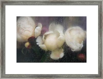 Dreaming Of Rembrandt Framed Print