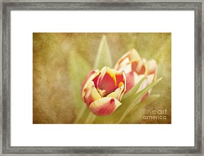 Dreaming Of Spring Framed Print by Cheryl Davis