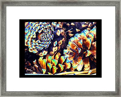 Framed Print featuring the photograph Dreamtime Pinecones by Susanne Still