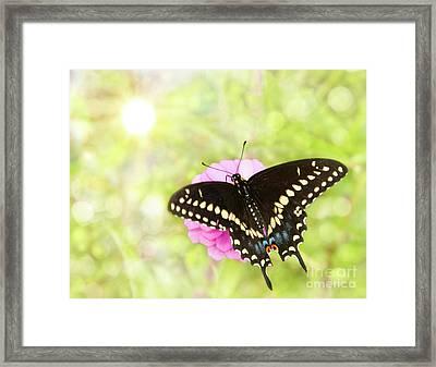 Dreamy Black Swallowtail Butterfly Framed Print