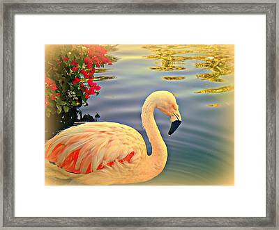 Dreamy Flamingo Framed Print by Kevin Moore