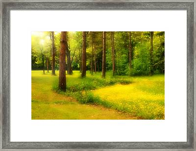 Dreamy Meadow Framed Print by Cindy Haggerty