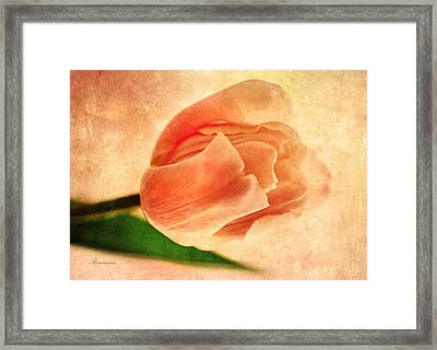 Dreamy Vintage Tulip Framed Print by Georgiana Romanovna