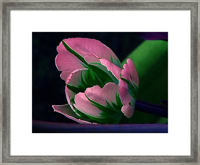 Dressed Framed Print by Elfriede Fulda