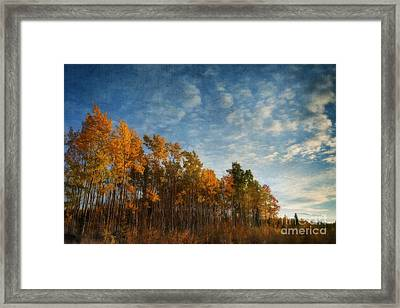 Dressed In Autumn Colors Framed Print by Priska Wettstein
