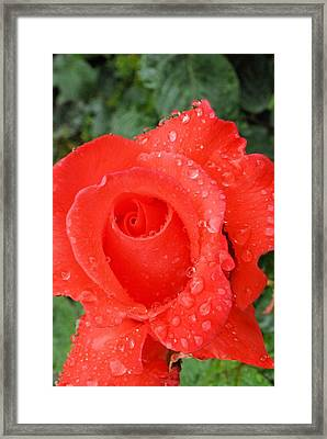 Dressed In Red Framed Print by
