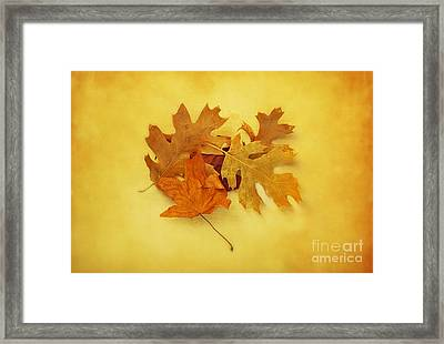 Dried Autumn Leaves Framed Print