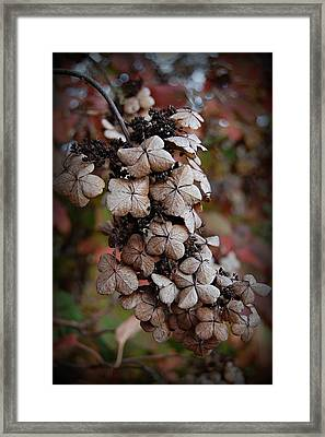 Dried Bloom 2 Framed Print by Beverly Hammond