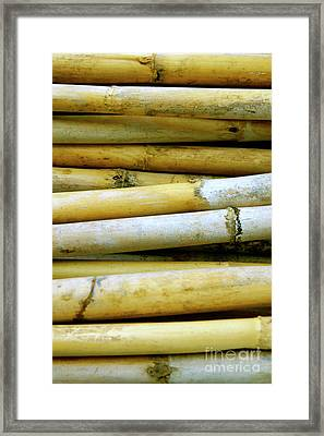 Dried Canes Framed Print by Carlos Caetano
