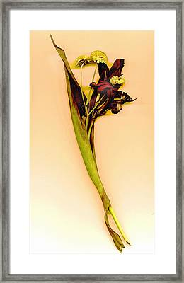 Dried Canna Framed Print by JDon Cook