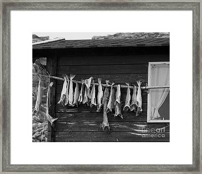 Dried Cod On A Line Framed Print by Heiko Koehrer-Wagner