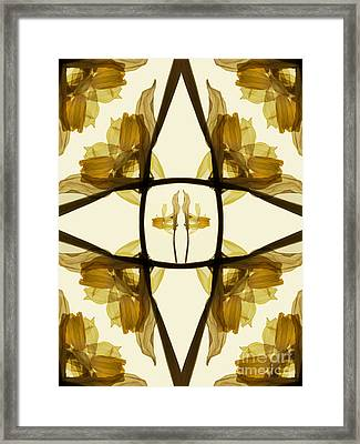 Dried Daffodil Composition Framed Print