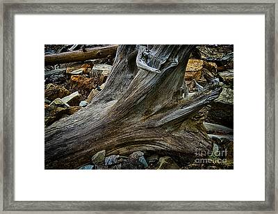 Drift Wood One Framed Print by Rick Bragan