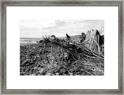 Driftwood And Rocks Framed Print