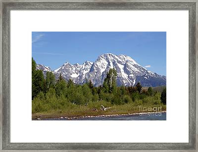 Framed Print featuring the photograph Driftwood And The Grand Tetons by Living Color Photography Lorraine Lynch