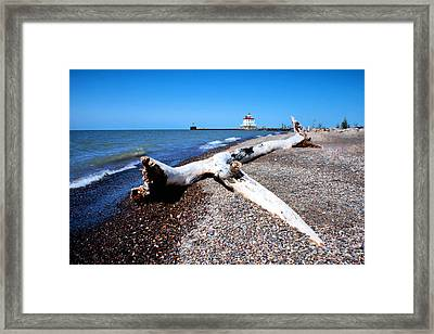 Framed Print featuring the photograph Driftwood At Erie by Michelle Joseph-Long
