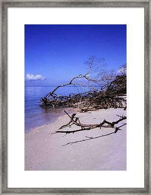 Driftwood Beach Framed Print by Rosalie Scanlon