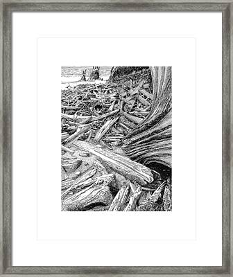 Driftwood Black Cat Framed Print by Jack Pumphrey