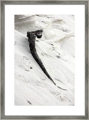 Driftwood Framed Print by Deborah Hughes