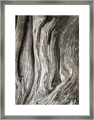 Driftwood Design 53 Framed Print by Larry Lawhead