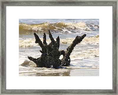 Driftwood Dragon Framed Print by Jim Ziemer