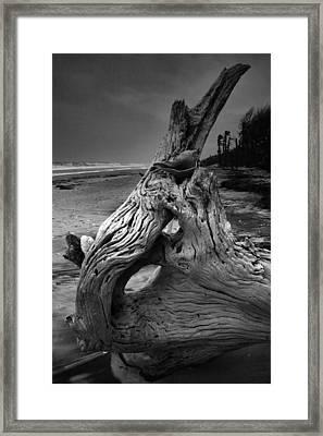 Driftwood On Beach Framed Print by Steven Ainsworth