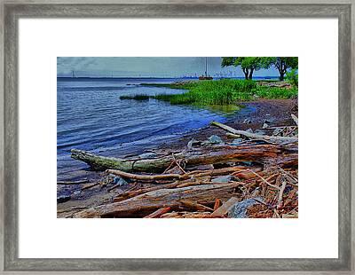 Driftwood On Shore Framed Print