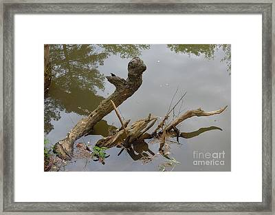 Framed Print featuring the photograph Driftwood by Renee Trenholm