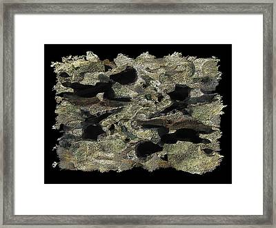 Driftwood Study Framed Print by Tim Allen