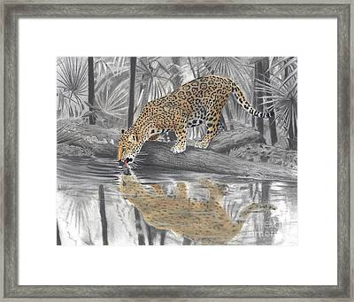 Drinking Jaguar Framed Print