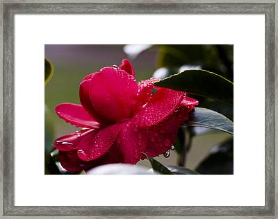 Dripping Color Framed Print by Jim Neumann