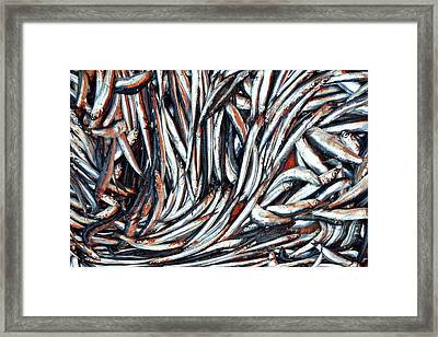 Dripping Fish Framed Print by Maria Luisa Corapi