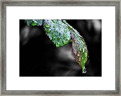 Dripping Wet Framed Print by Karen M Scovill